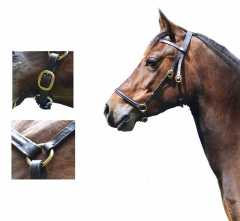 English Leather In Hand Show Bitless Bridle Halter