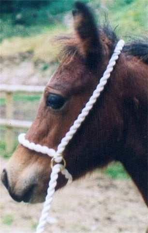 Adjustable Halter Rope EXTRA LONG Option