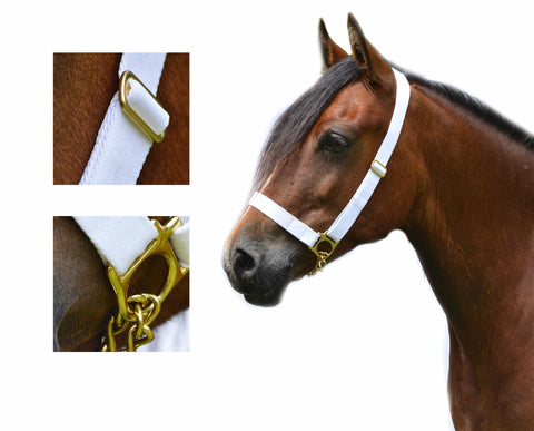 "1"" Adjustable Show Halter Chain Lead"