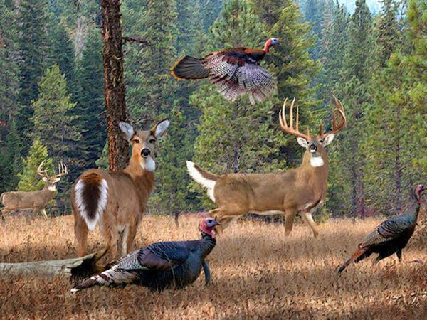 What Wild Game Animal Are You?