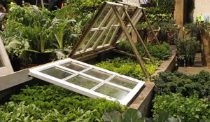 Cloches and Cold Frames for growing through the winter