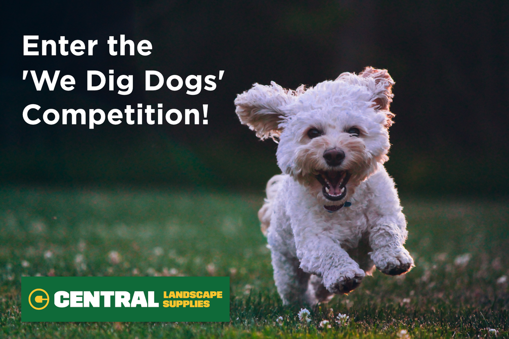 Enter the 'We Dig Dogs' Competition!