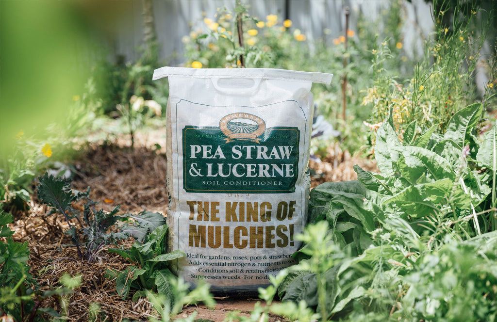 Somerset Pea Straw & Lucerne
