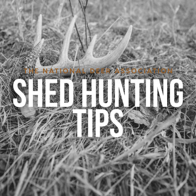 6 Shed-Hunting Tips from The National Deer Association