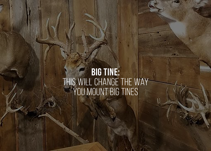 Big Tine: This Will Change The Way You Mount Big Tines