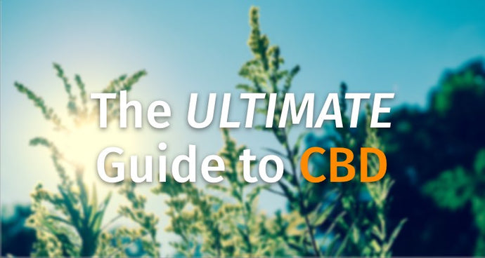 The Ultimate Guide to Cannabidiol