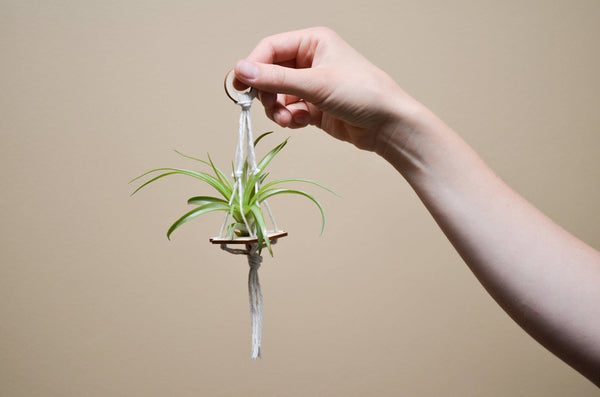 Air Plant Hanger // Wedding Decor and Favours