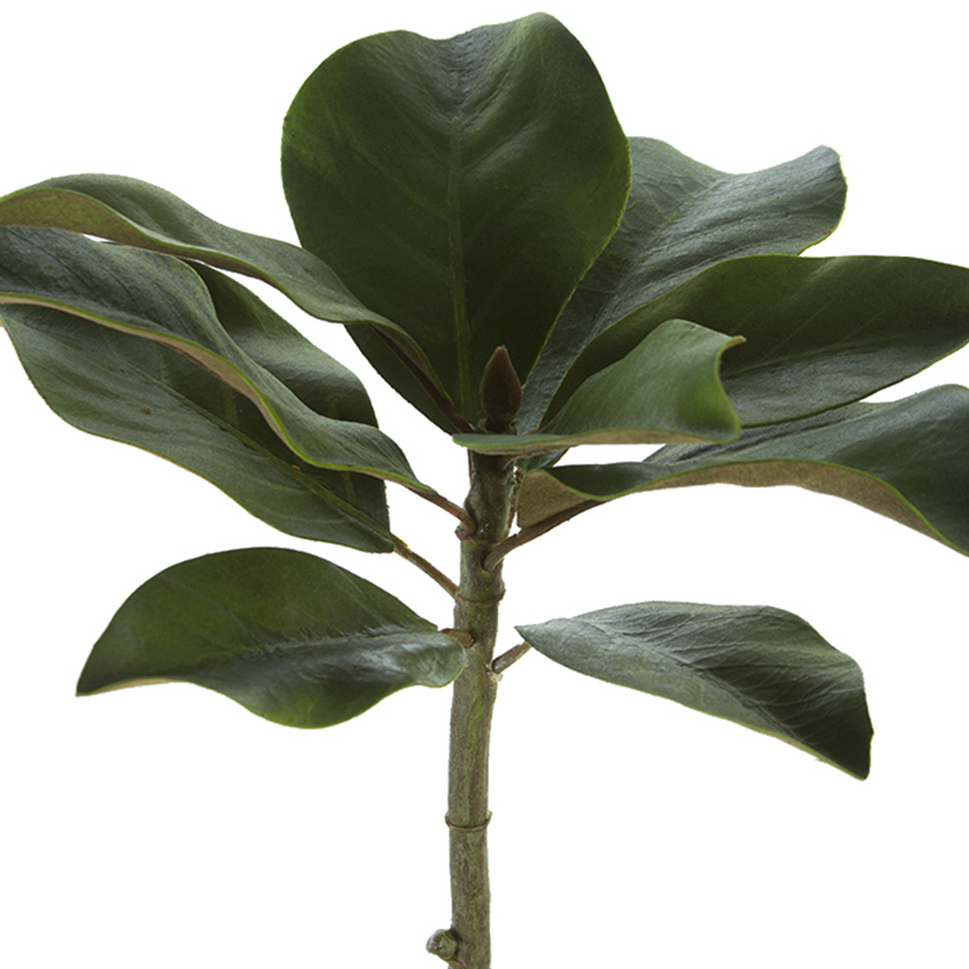 Magnolia Leaves 15