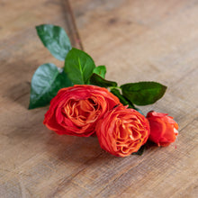 Cabbage Rose Spray Orange