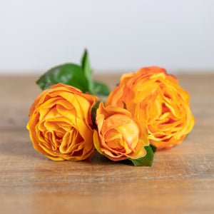 Cabbage Rose Spray Light Orange