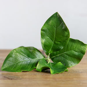 "22"" Ceiba Leaves Branch Green"