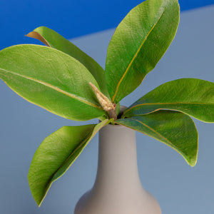 Mini Magnolia Leaves