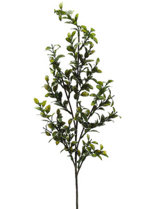 Mini Pittosporum Spray VG 33""
