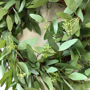 Long Leaf Eucalyptus Wreath 24""