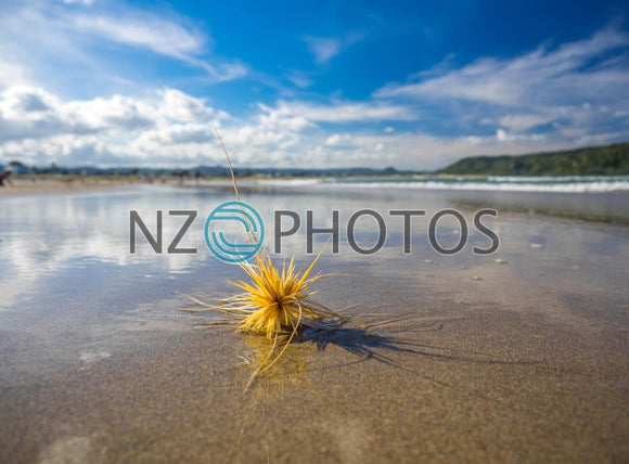 Coastal Spinifex Stock Photo