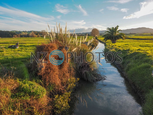 Waikato Farmland Stock Photo