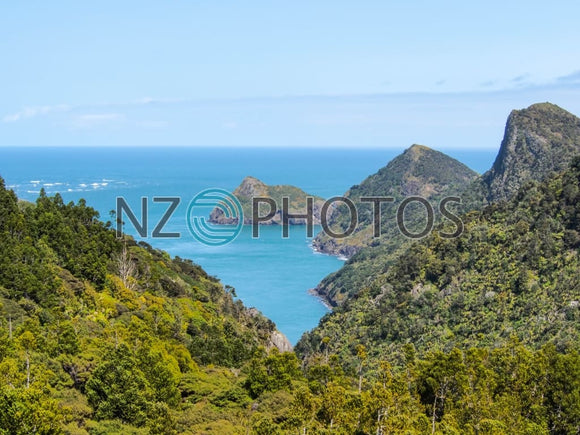 Waitakere Ranges Stock Photo