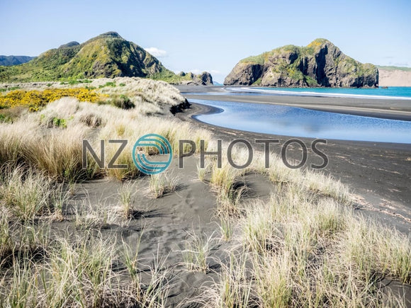 Whatipu Beach Vegetation Stock Photo