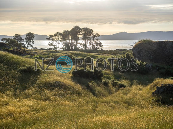 Otuataua Stonefields Stock Photo