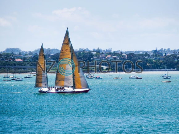 Sailing The Shoal Bay In Auckland Stock Photo