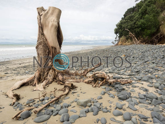Orere Point Driftwood Stock Photo