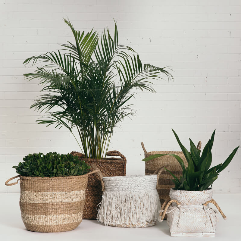 Assorted Plants & Baskets