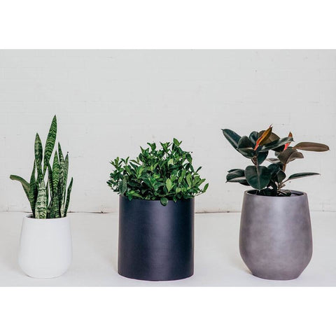 Assorted Plants & Pots