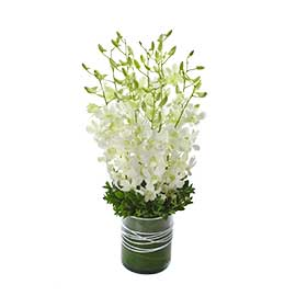 Virtue Wandin Florist Wedding Flowers Arrangement Yarra Valley Lilydale Dandenong Ranges Singapore Vander Orchids with Glass Vase