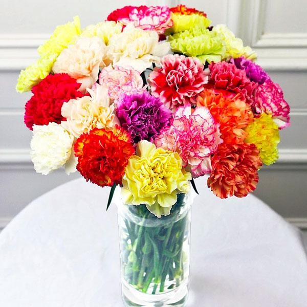 Mixed Carnations Bunch (10 stems)