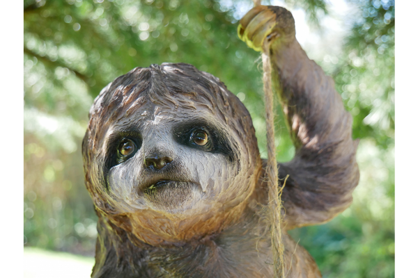 Salvador the climbing Sloth on rope