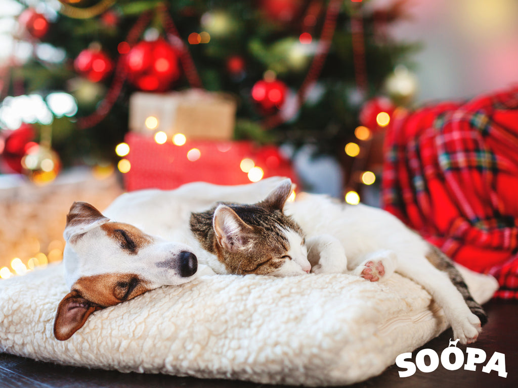 Keeping Pets Calm for Christmas