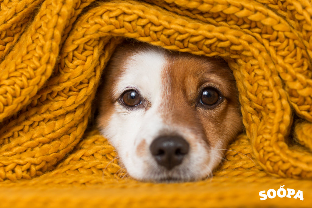 Keeping Your Dog Safe in Freezing Temperatures