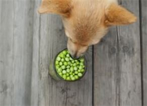 Health Benefits of Peas For Your Dog