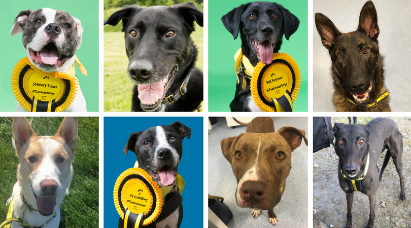 Soopa & Dogs Trust Dog Of The Week