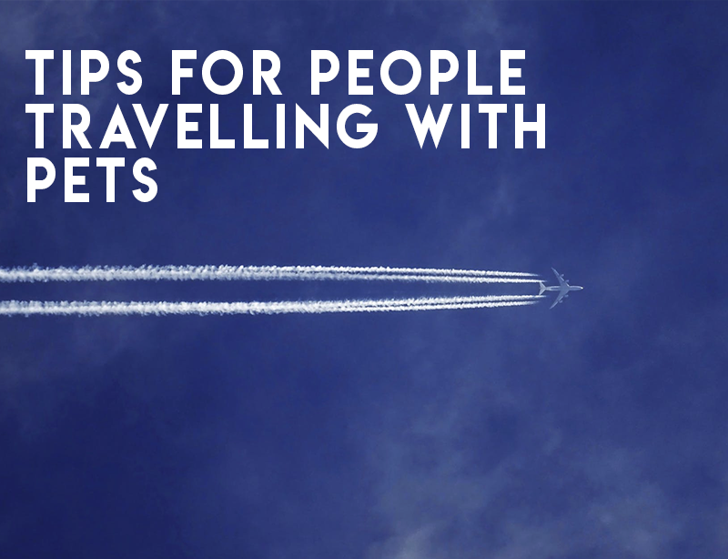 Tips for People Travelling with Pets
