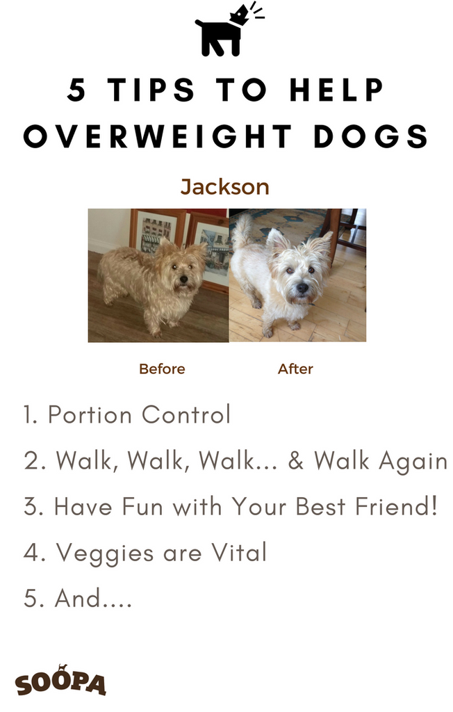 5 Tips To Help Overweight Dogs