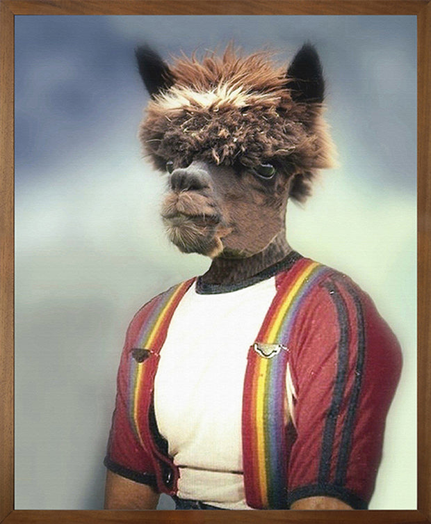 Anthony Alpaca Canvas