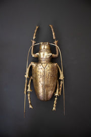 Gold Longhorn Beetle Wall Decoration