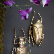 Gold Water Beetle Wall Decoration