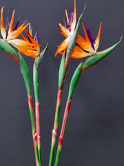 Faux Orange Bird of Paradise Stem - set of 3 stems
