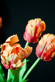 Faux Coral Real Feel Parrot Tulip - set of 2