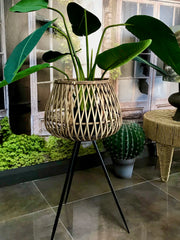 Large Natural and Black Bamboo Plant Stand