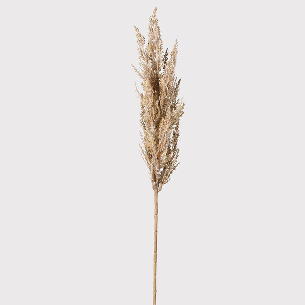 Beige Pampas Grass Spray - set of 4