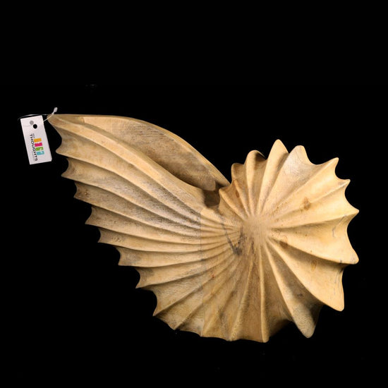 Wooden Sea Shell