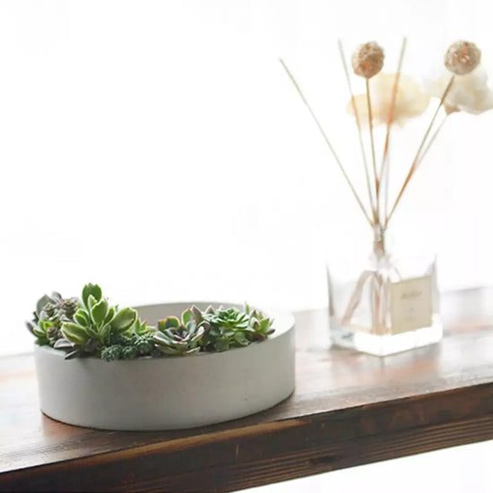 Round Succulent Planter & Holder