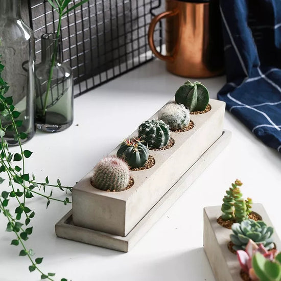 Rectangular Succulent Planter & Tray