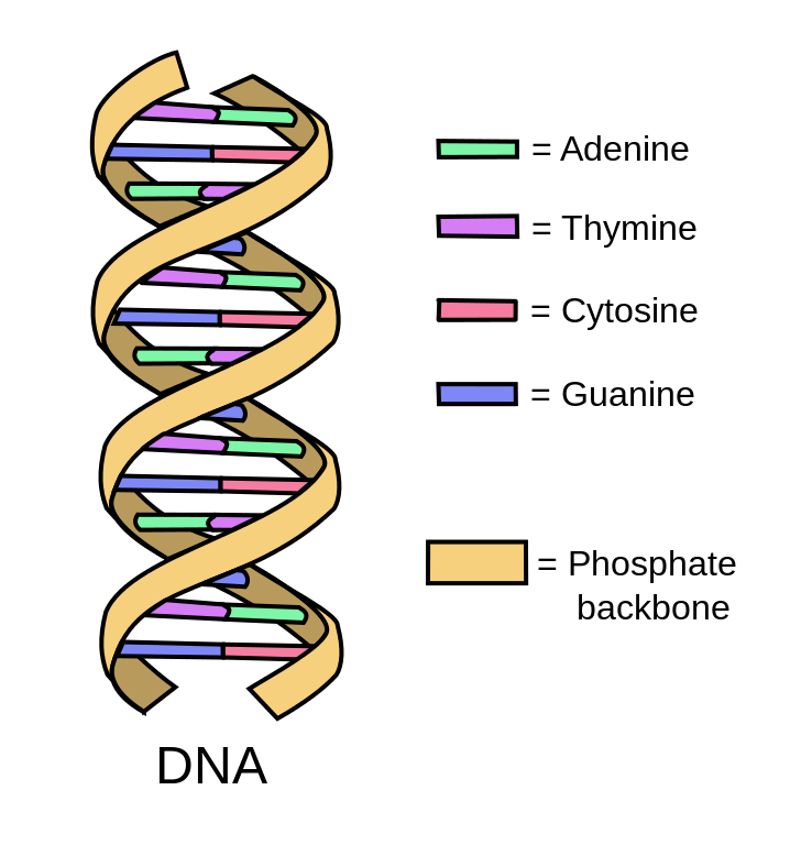 DNA Kit - What Is The Function Of DNA? – MelixGX