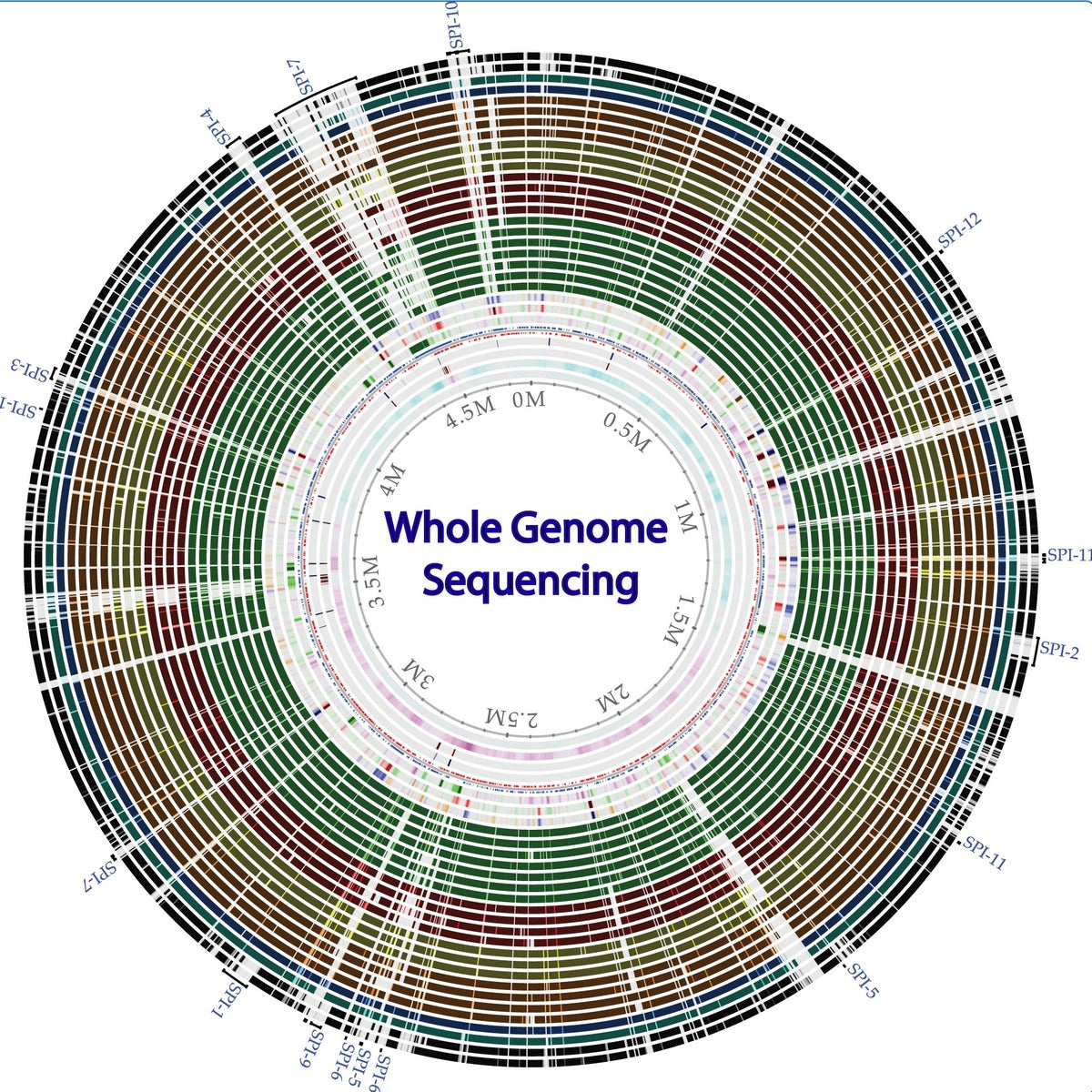 What is the Genome?