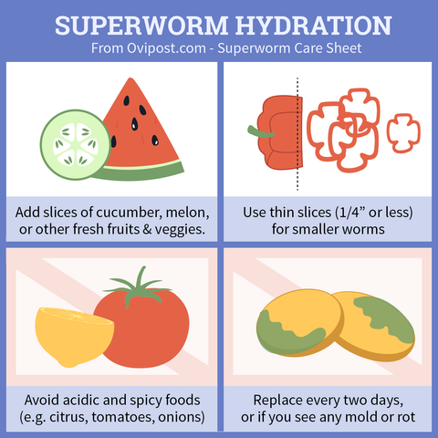 Superworm hydration tips