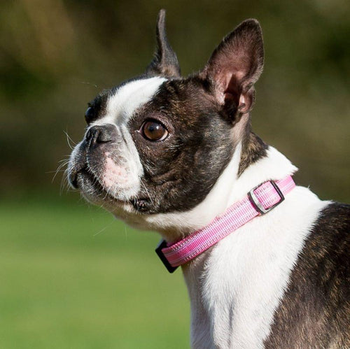 Comfort Collar Pink-Pets-HOUSE of BOTTA